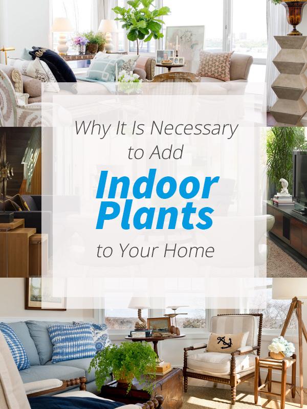 چرایی استفاده از گیاهان در دکوراسیون داخلی