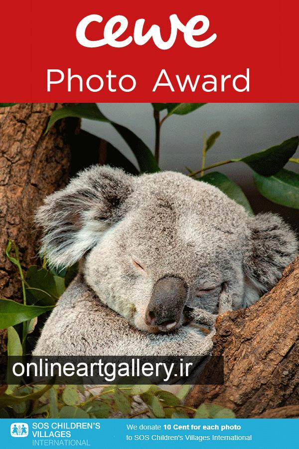 فراخوان جایزه عکس CEWE 2021