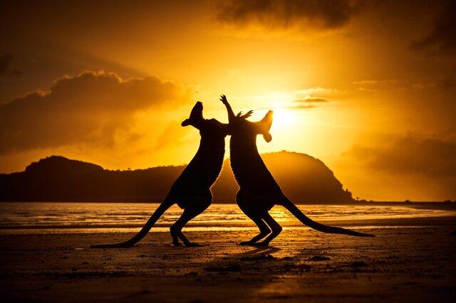 نگاهی به عکس های منتخب از طبیعت استرالیا